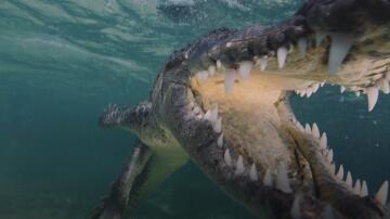 Bild zu Chinchorro, Mexiko, Florian Fischer, Krokodile