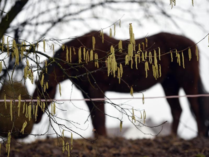 Bild zu Häufige Pferdekrankheit