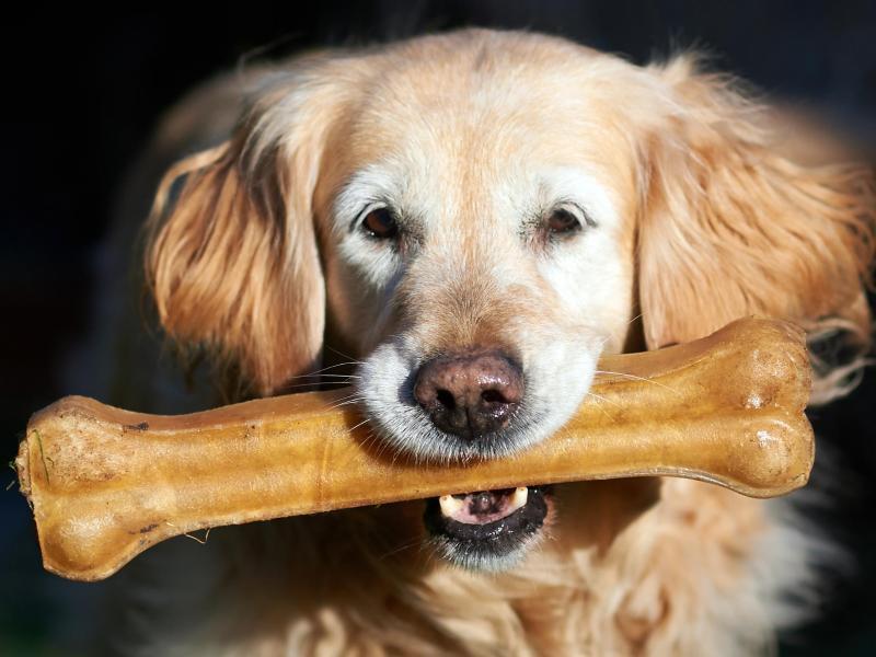 Bild zu Gesunde Hundezähne