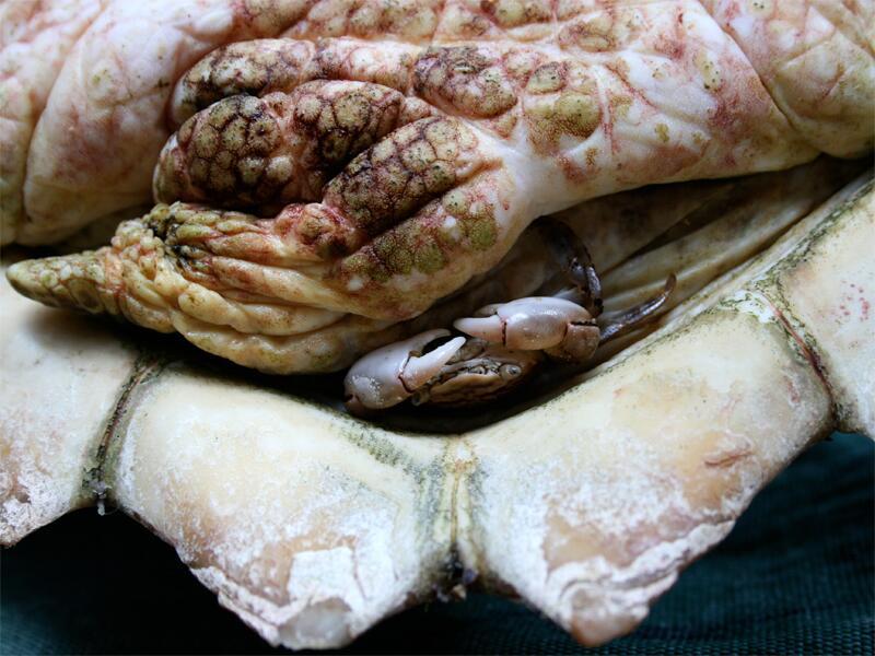 Bild zu Lebensraum einer Krabbe