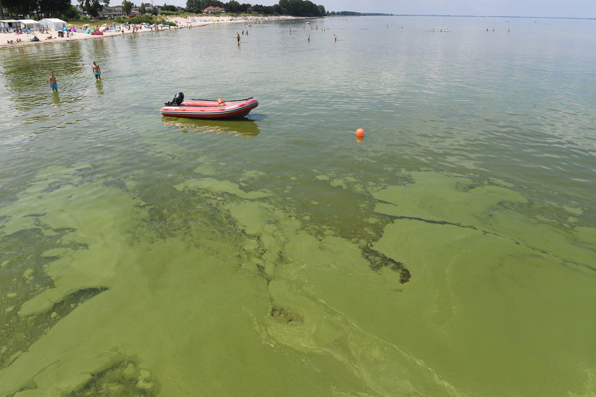 Bild zu Grünalgen in der Ostsee