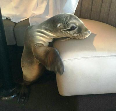 Bild zu Seelöwenbaby in Hotel
