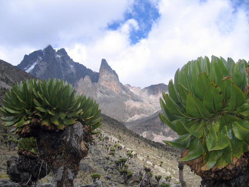 Bild zu Mount Kenya