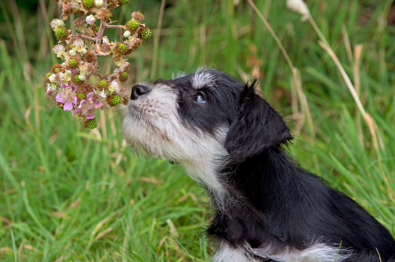 Bild zu Hund, Schnüffeln