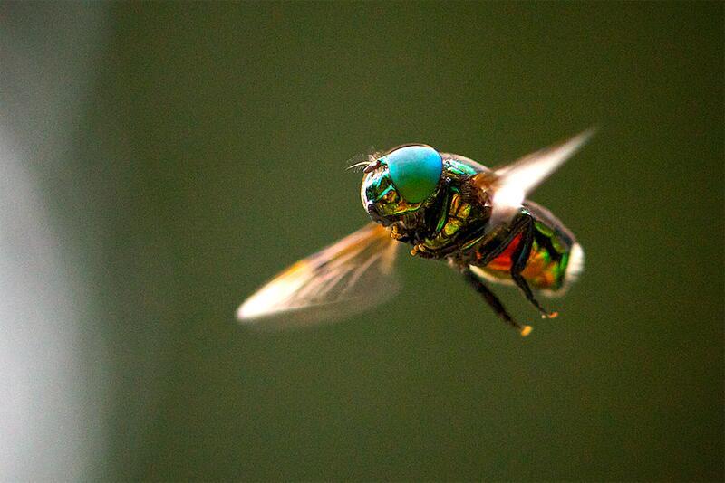 Bild zu Fliege im Flug