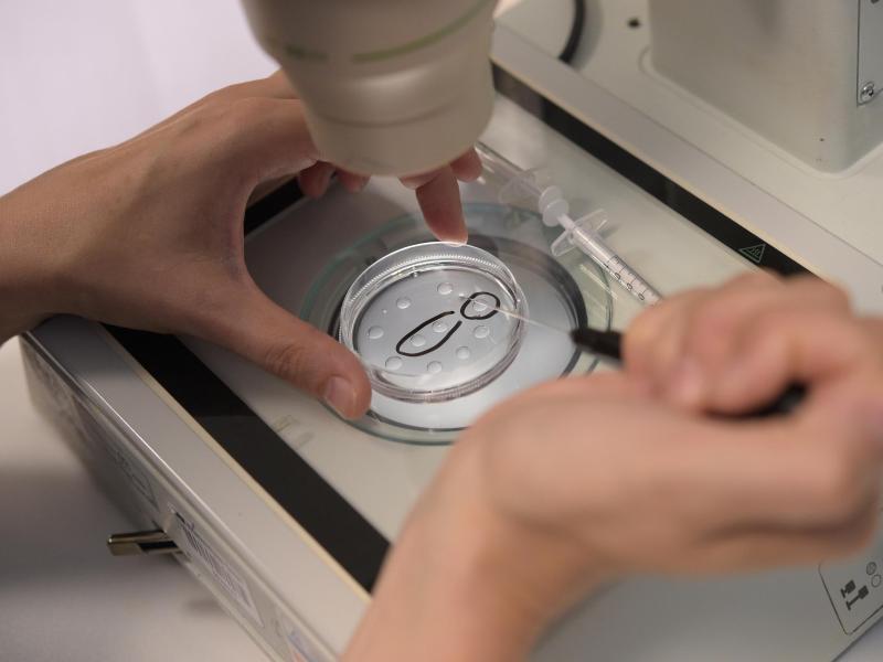 Bild zu Eizellen-Präparation