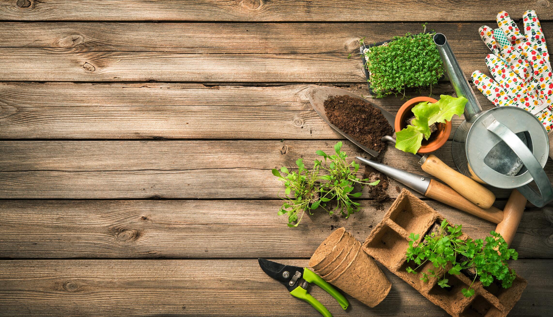 Bild zu Garten, Anbau, Blumen, Pflanzen, Beet, Balkon, Kompost, Hilfsmittel, Erde, Natur