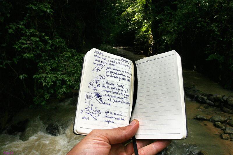 Bild zu Notizbuch eines Ornithologen