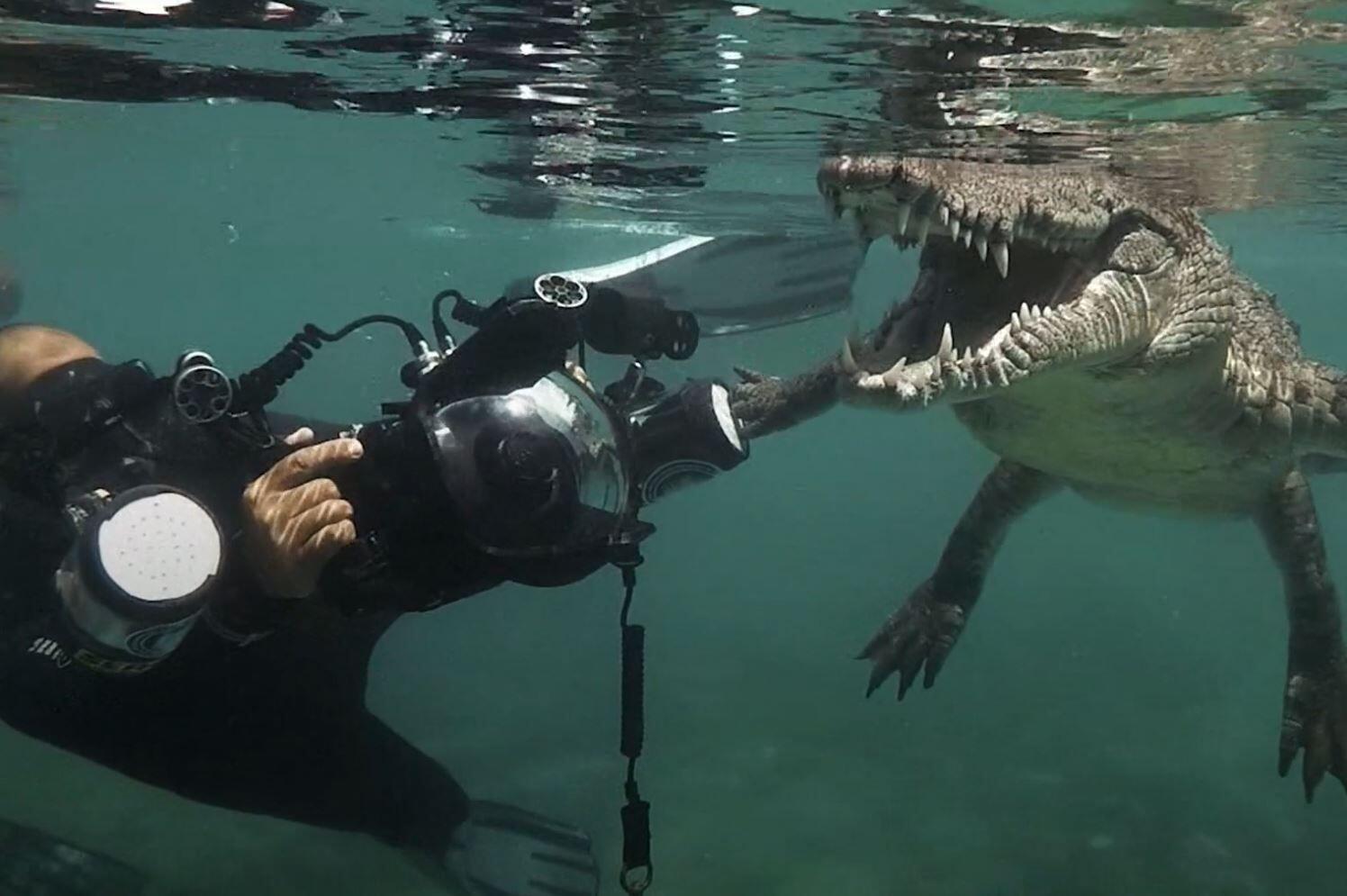 Venedig Krokodil