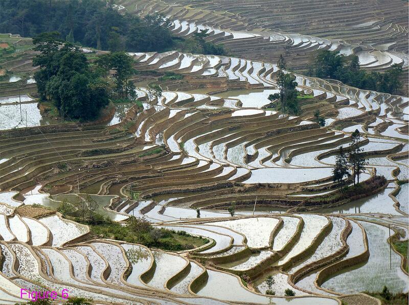 Bild zu Reisanbau in Yuanyang, China