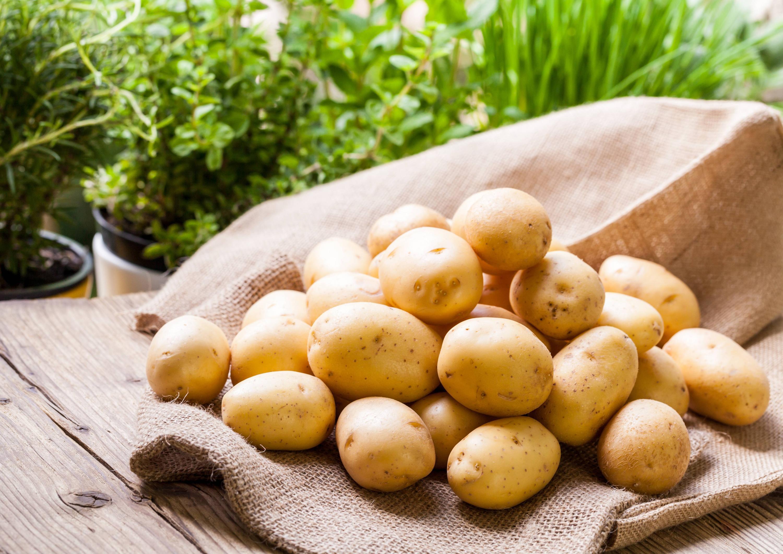 Bild zu Kartoffel