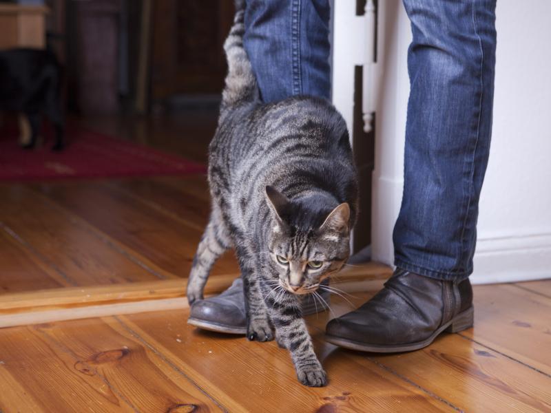 Bild zu Katze des Gastgebers