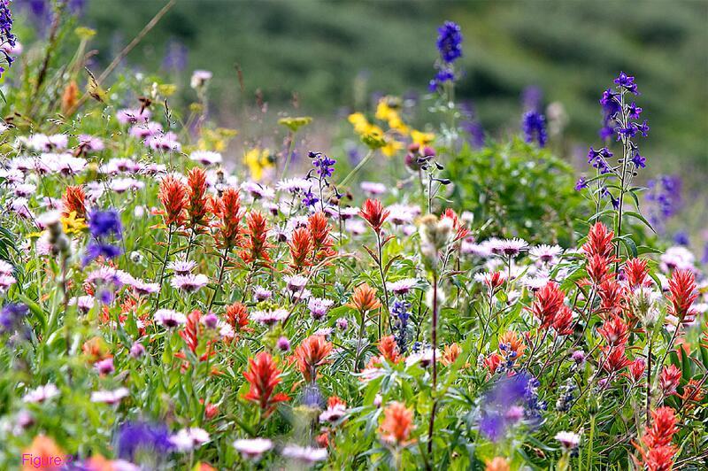 Bild zu Blumenwiese