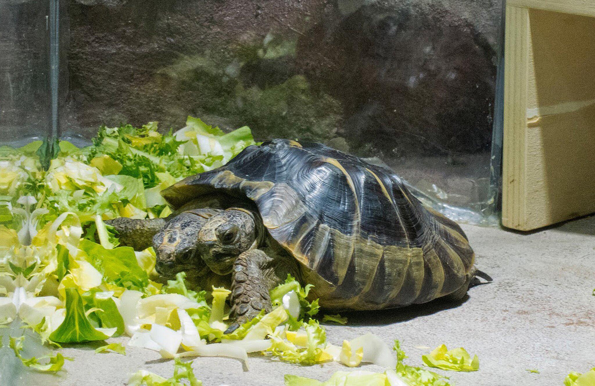 Tolle Schildkröte Farbseiten Ideen - Malvorlagen Von Tieren - ngadi.info