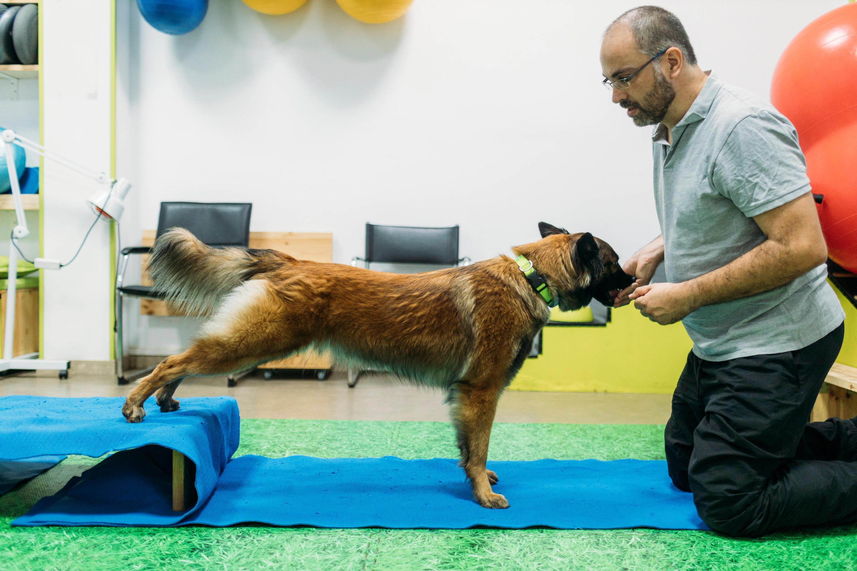 Bild zu Physiotherapie, Hunde