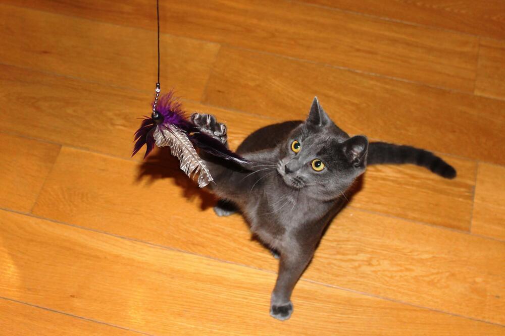 Katze Handout
