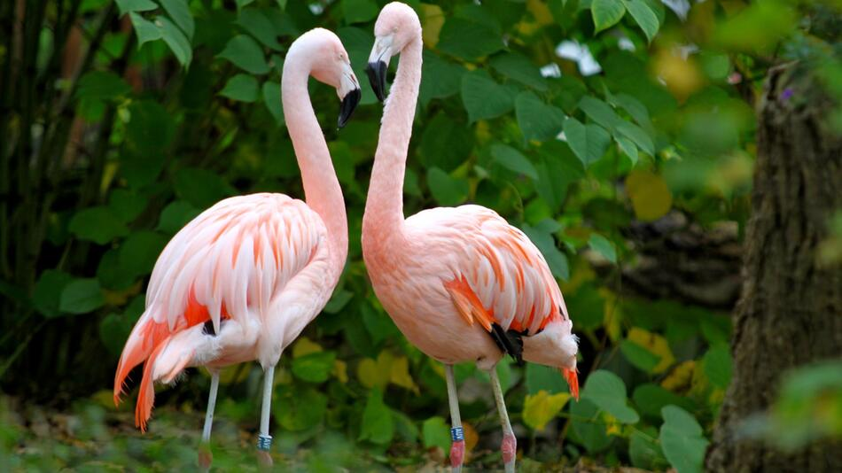 Flamingo gestohlen: Tierpark Hamm glaubt nicht an ein Wiedersehen