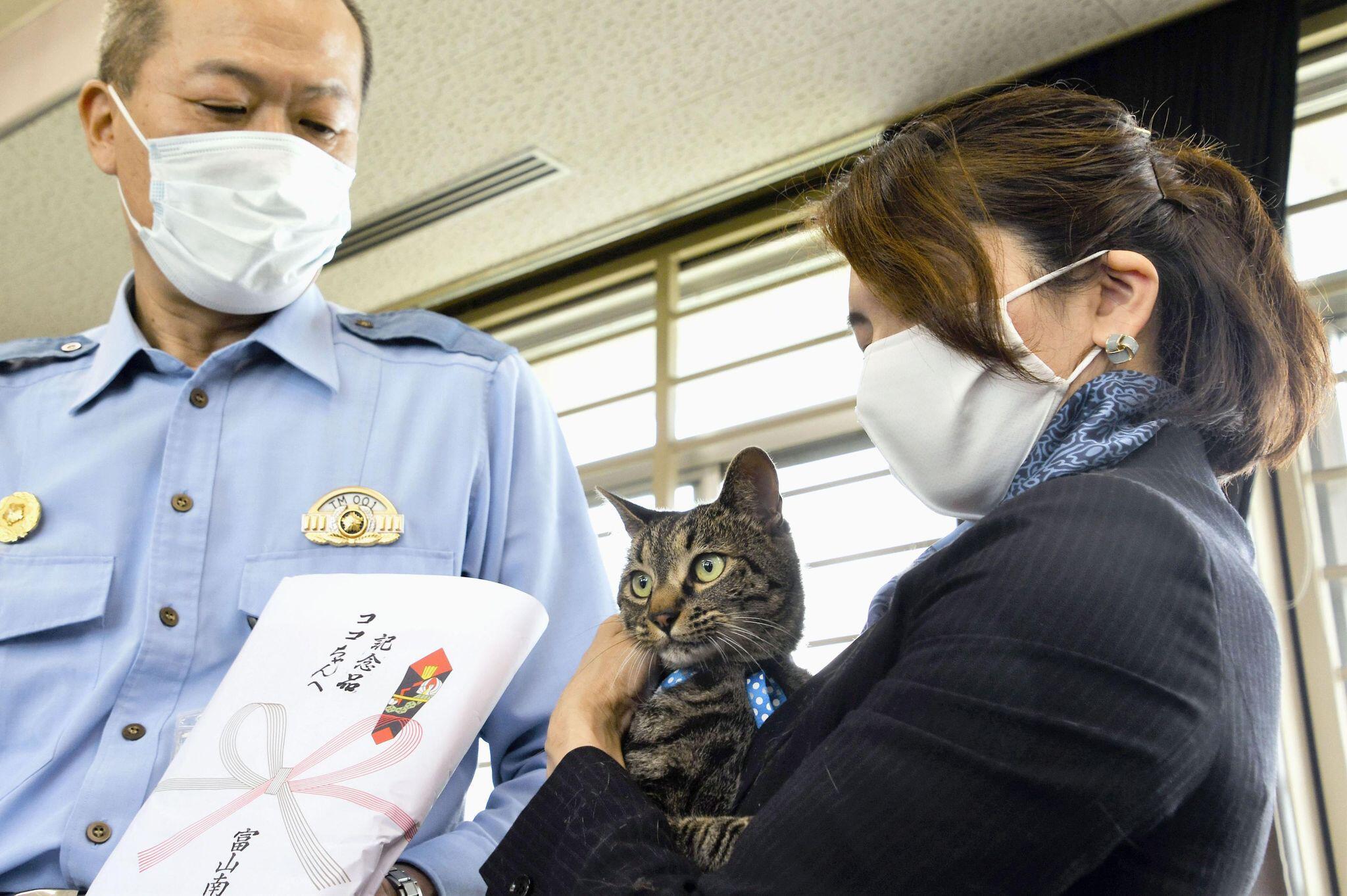 Bild zu Kater in Japan erhält Dankesurkunde nach Rettungseinsatz