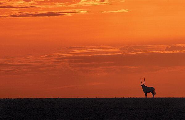 Bild zu Erdhörnchen in Namibia