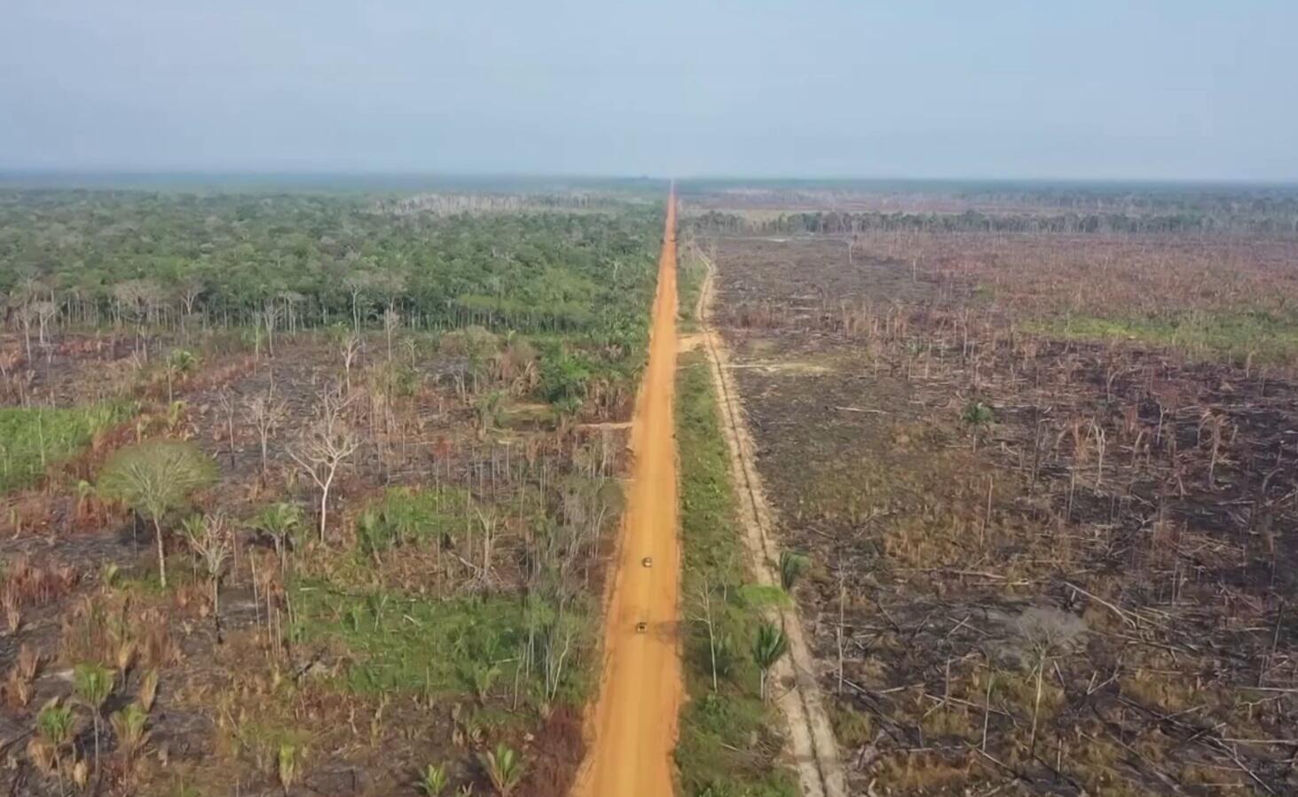 Bild zu Regenwald, Rodung, Bolsonaro