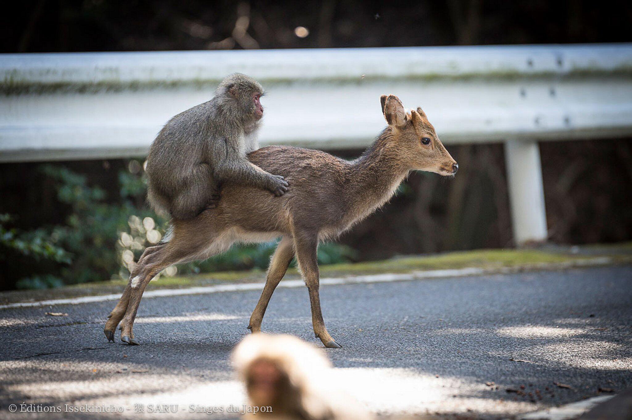 Bild zu Affe liebt Hirsch