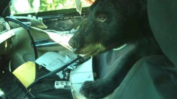 Bild zu Bär in Auto
