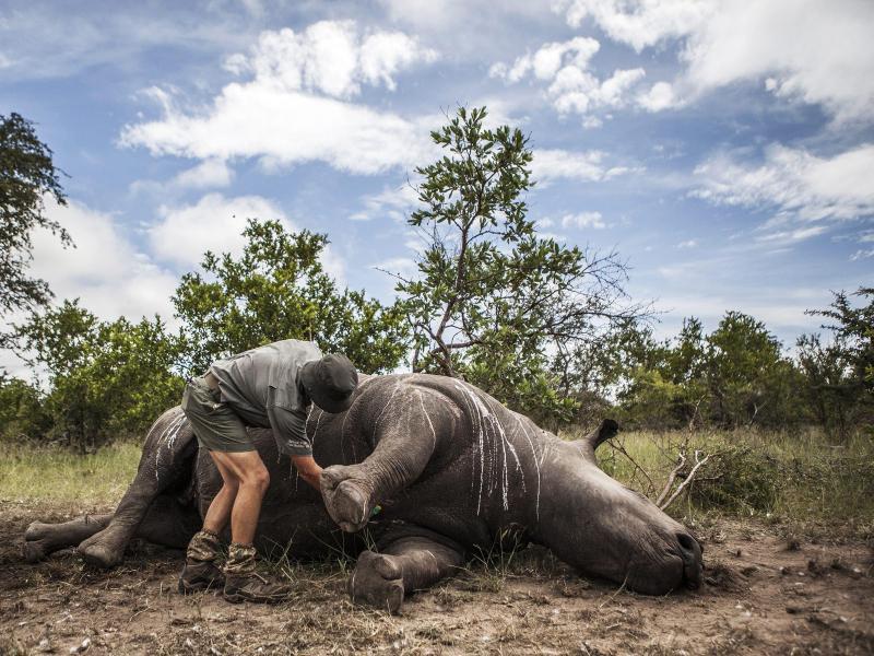 Bild zu Getötetes Nashorn in Südafrika