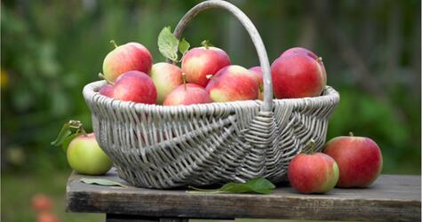 So bleiben die Äpfel länger haltbar.