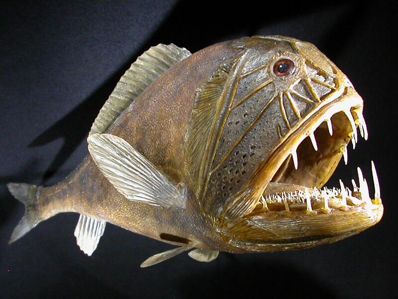паразиты в морской рыбе опасные для человека