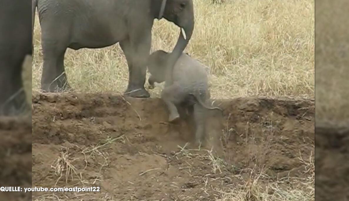Bild zu Babyelefant