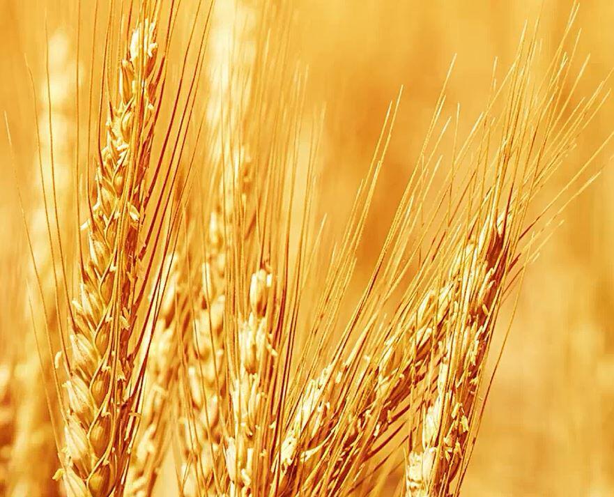 Bild zu Fünf Getreidealternativen fuer Weizenallergiker