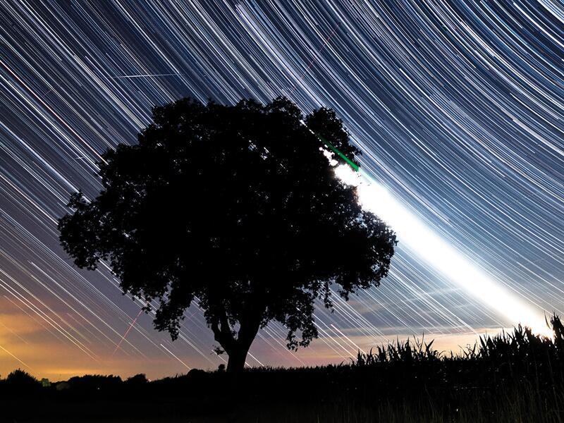 Bild zu Baum mit Sternen
