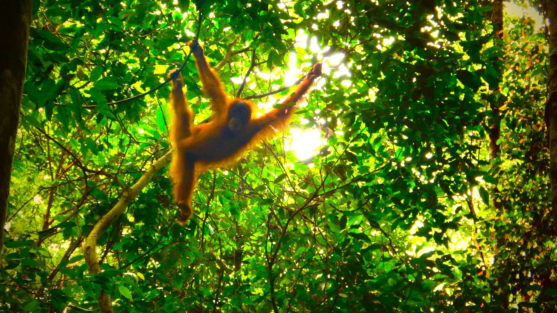 Bild zu Sumatra