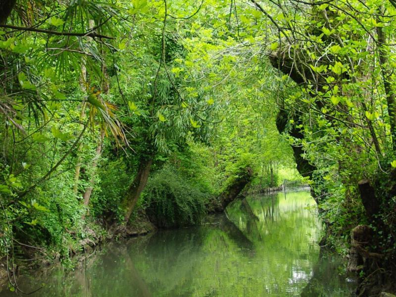 Bild zu Sumpflandschaft