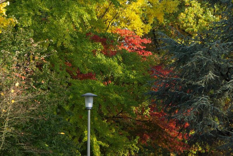 Bild zu Bäume mit bunten Herbstblättern.