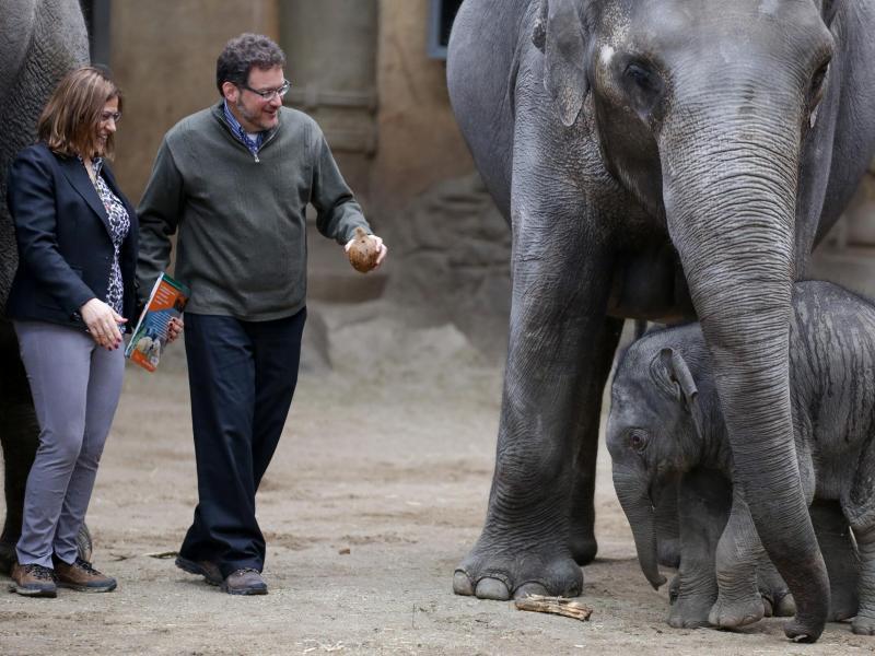 Bild zu Elefantentaufe bei Hagenbeck
