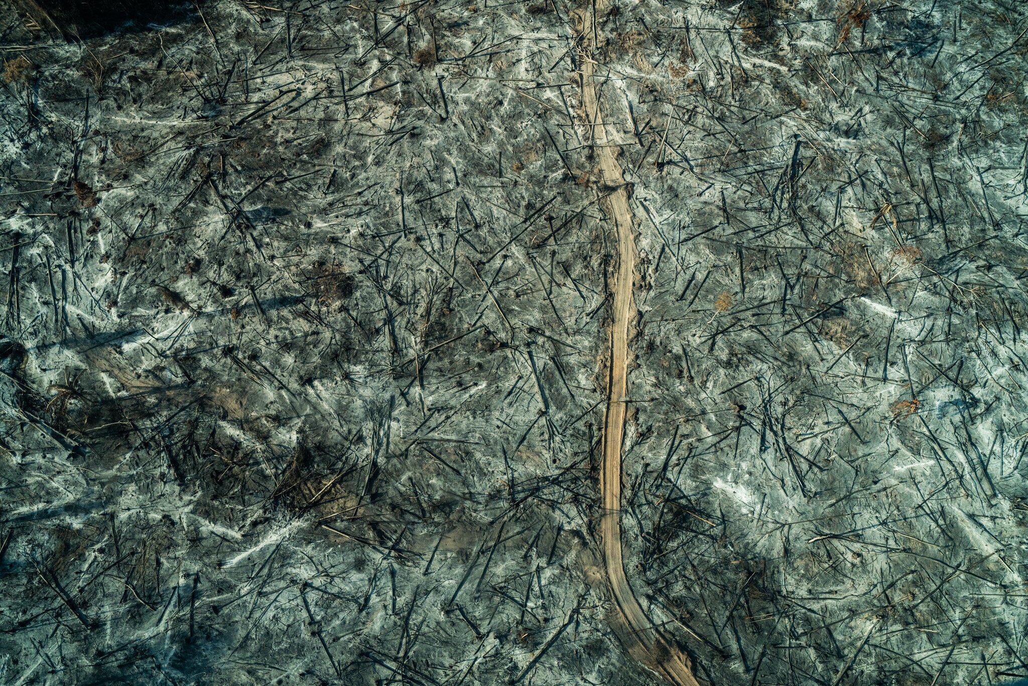 Bild zu Brände im Amazonasgebiet