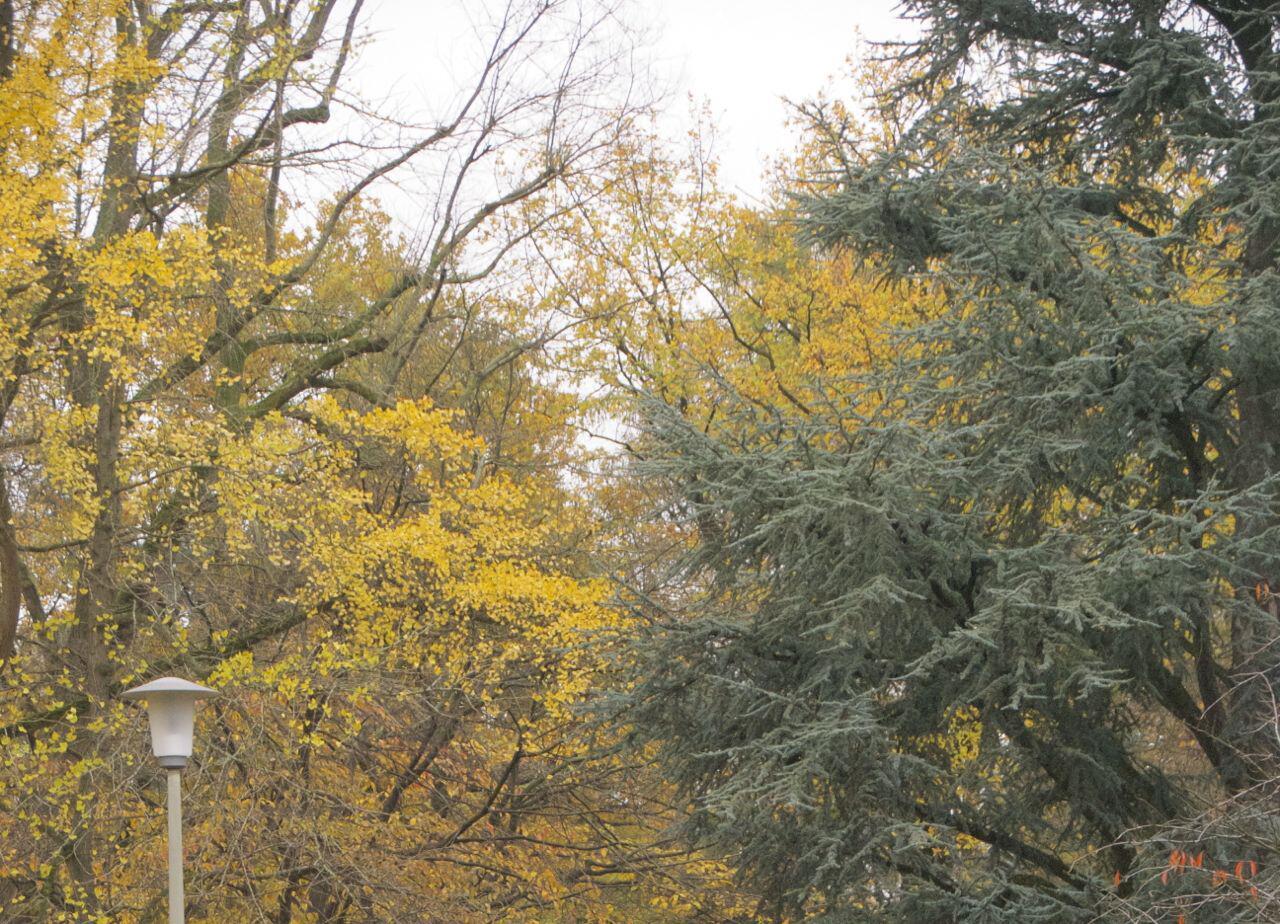 Bild zu Kahl werdende Bäume