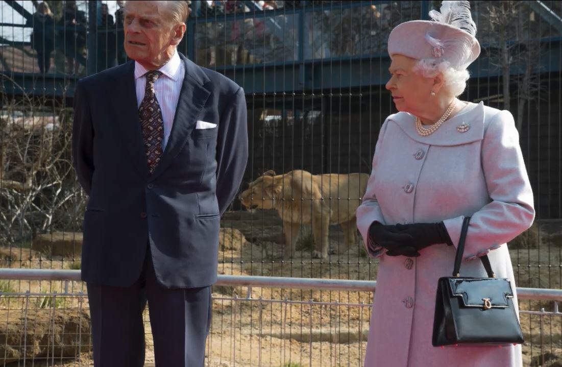 Bild zu Die Königin der Löwen