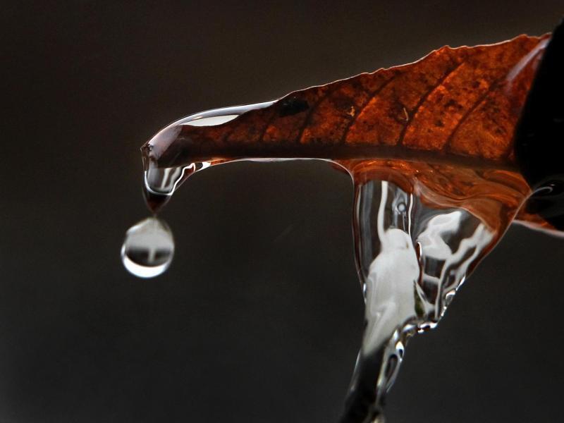 Bild zu Laub in der Regenrinne