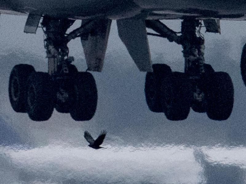 Bild zu Begegnung mit einem Vogel