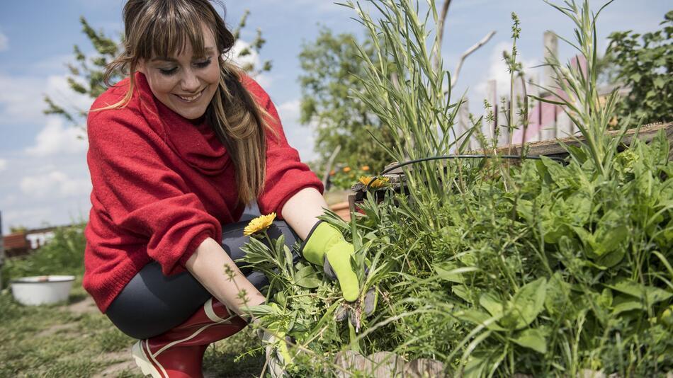 Naturnahes Gärtnern:Ist das Unkraut - und darf das bleiben?