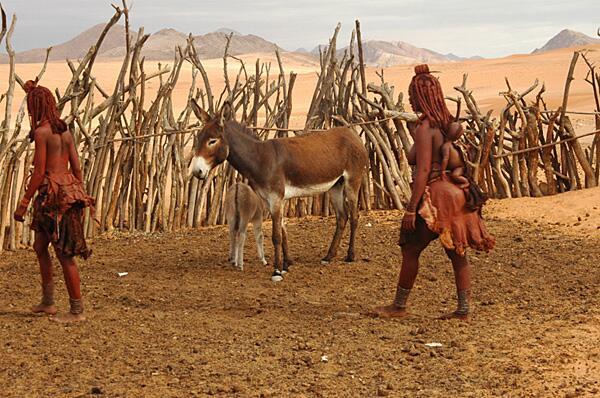 Bild zu Himba
