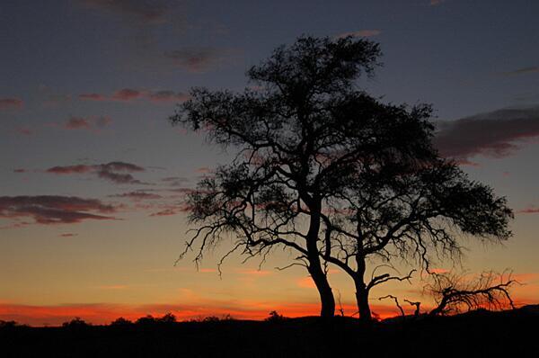 Bild zu Abendromantik in der namibischen Landschaft.