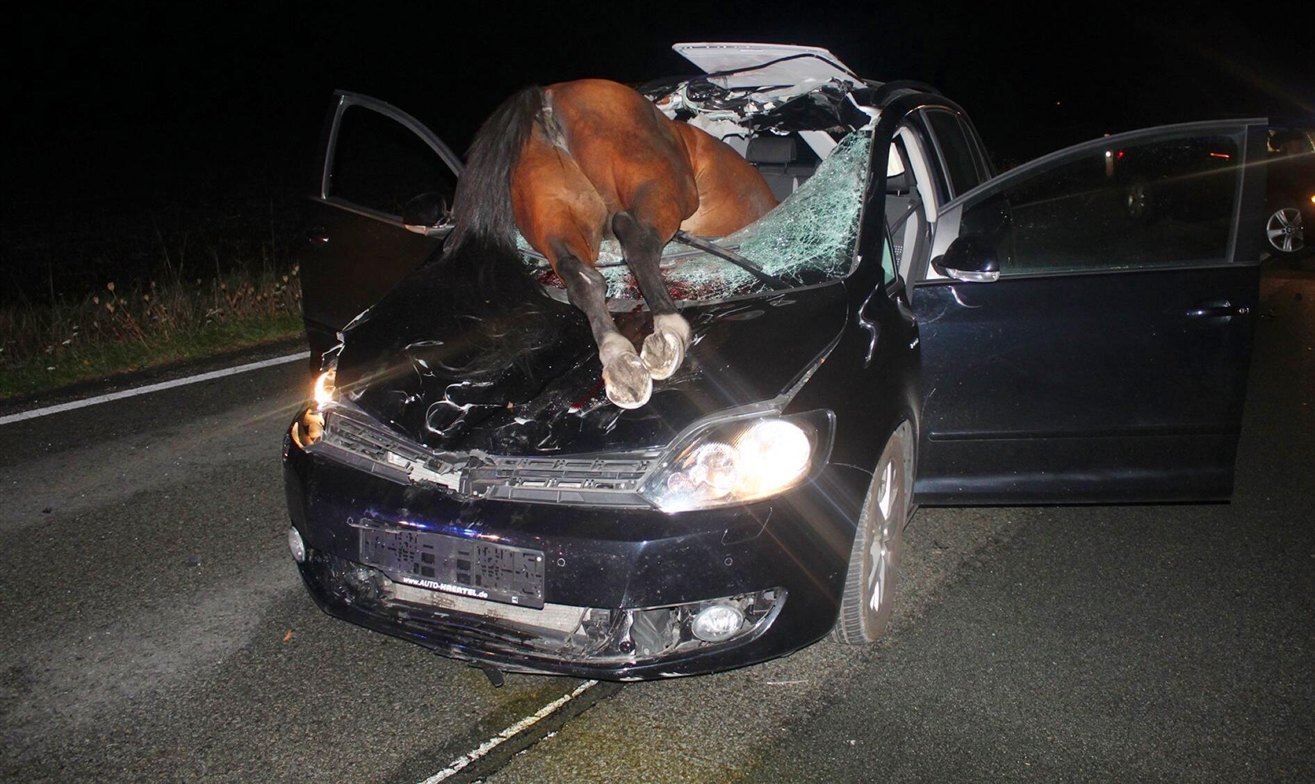 Bild zu Pferd kracht durch Windschutzscheibe