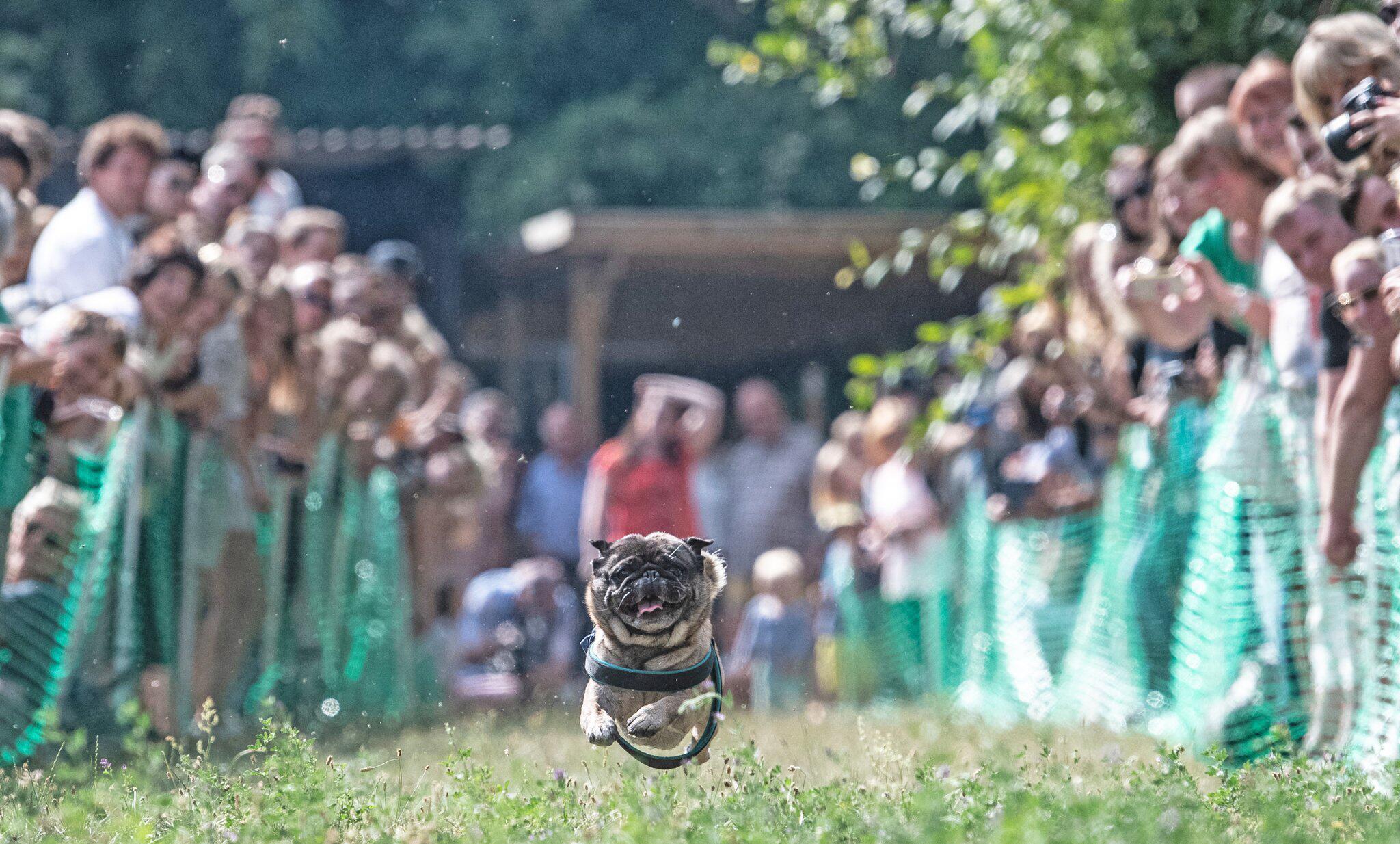 Bild zu 9. International Pug Meeting