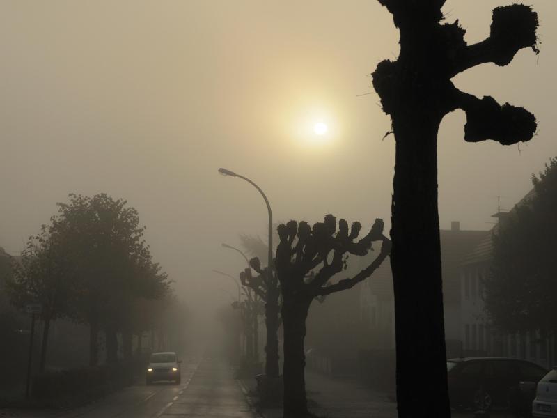 Bild zu Schlechte Sicht durch Nebel