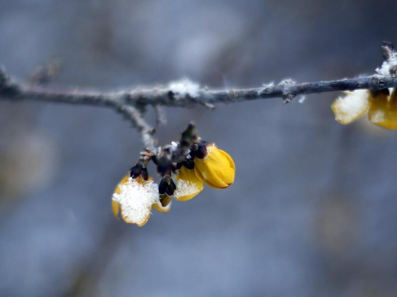 Bild zu Winterwetter