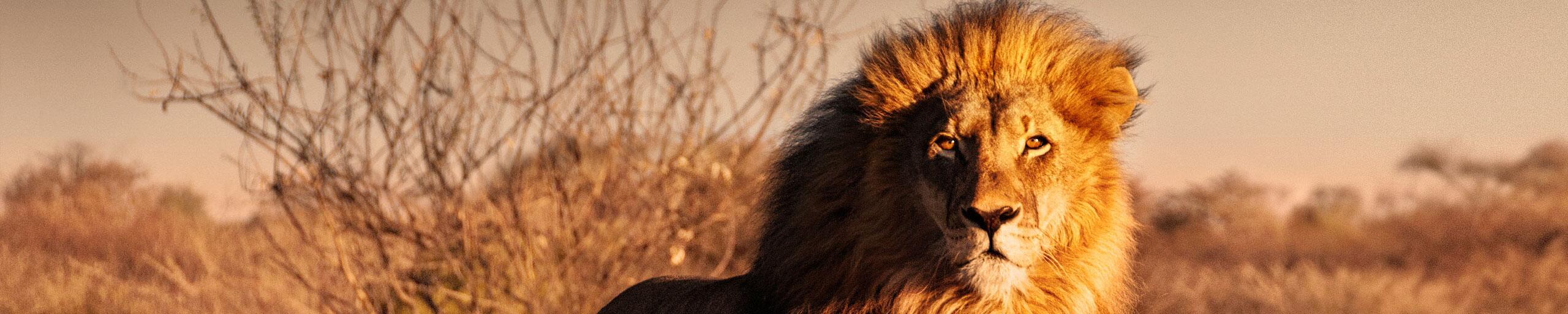 Bild zu Höhle des Löwen
