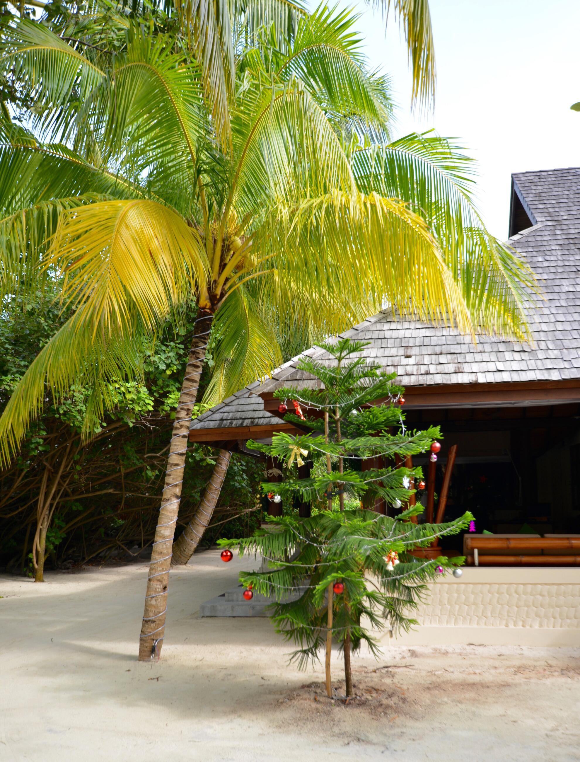 Bild zu Christbaum unter Palmen